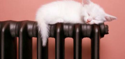 тепло во сне