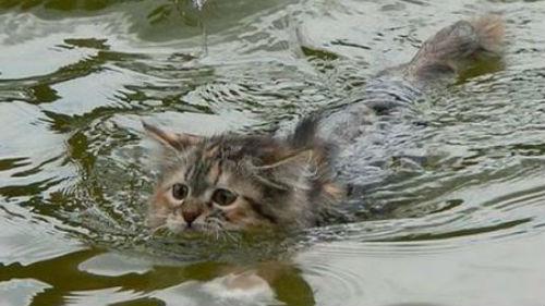 тонет котенок