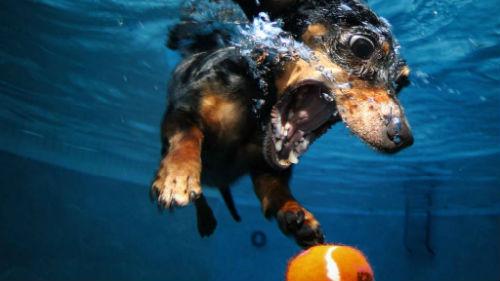 тонущая собака