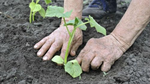 когда высаживать рассаду в мае 2020