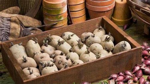 подготовка картофеля в феврале