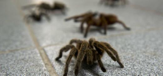 много пауков во сне