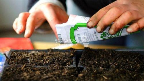 посадка овощей для рассады в марте