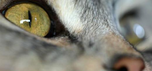 мертвый кот во сне