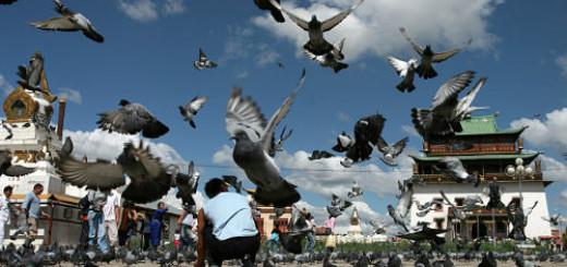 много голубей видеть во сне
