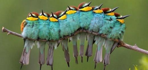 к чему снится много красивых птичек