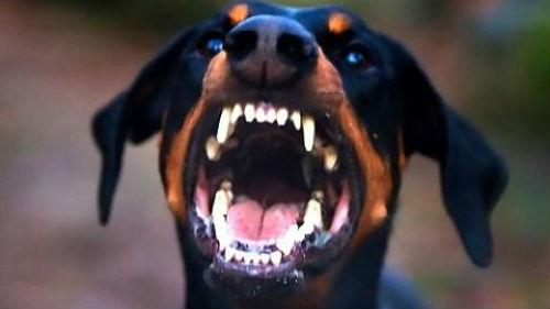 напала собака большая черная