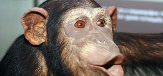 обезьяна во сне