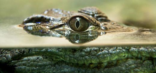 убить крокодила во сне