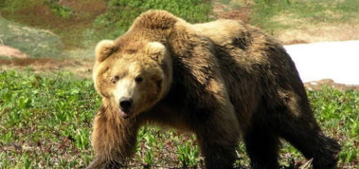 убить бурого медведя во сне