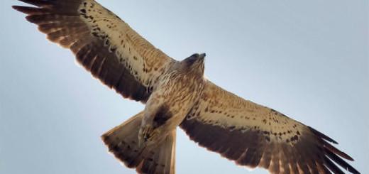 видеть орла в небе во сне