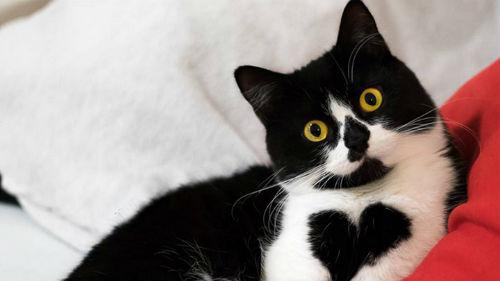 черно белый котенок
