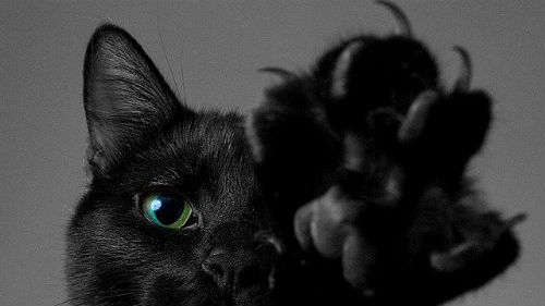 черный кот нападает