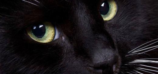 черная кошка во сне
