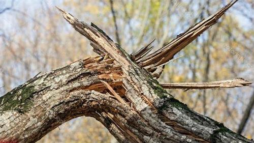 ураган валит деревья