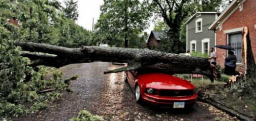 упало дерево на машину во сне