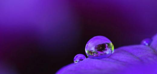 к чему снится фиолетовый цвет