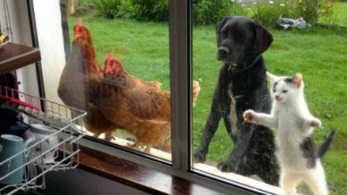 животные в окне