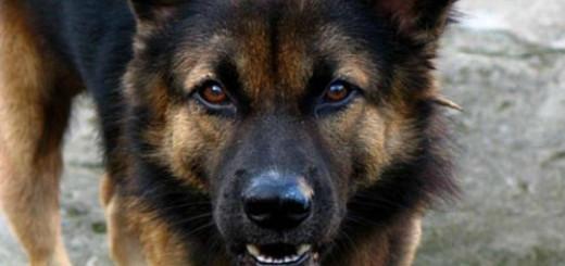 укус собаки до крови во сне