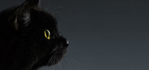 к чему снится черный кот женщине