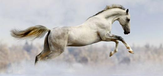 белый конь во сне
