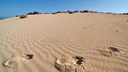 следы в песчаной пустыне