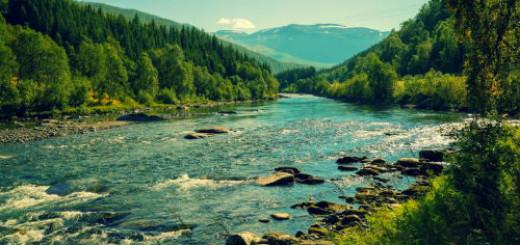 берег реки во сне