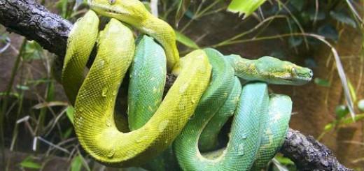 две змеи во сне