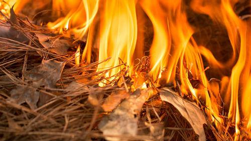 видеть как сгорело поле