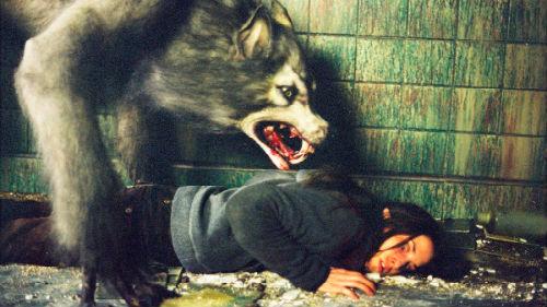 нападение волка-гиганта