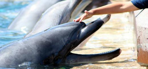 гладить дельфина во сне