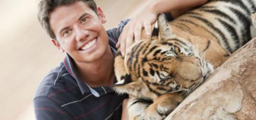 гладить тигра во сне