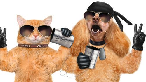 видеть как беседуют кот и пес