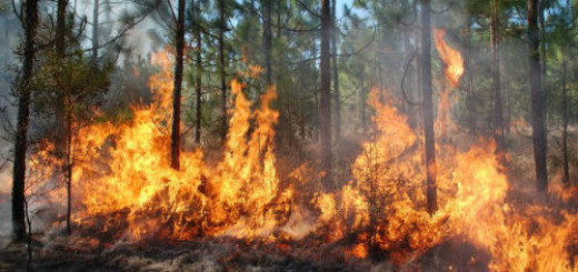 горящее дерево во сне