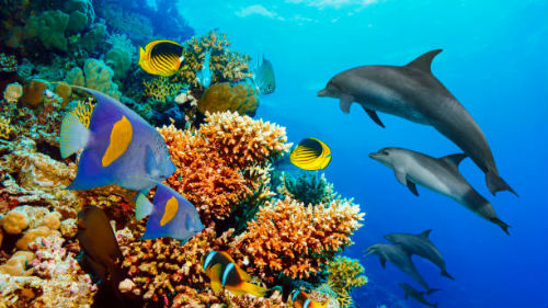 видеть дельфинов в море