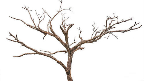 видеть мертвое дерево
