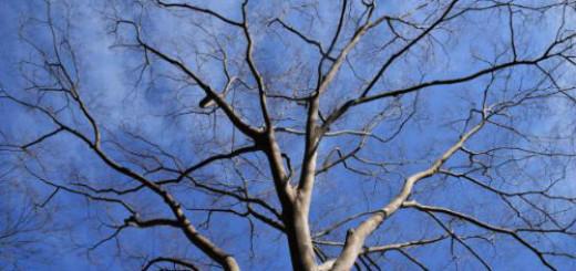 дерево без листьев во сне