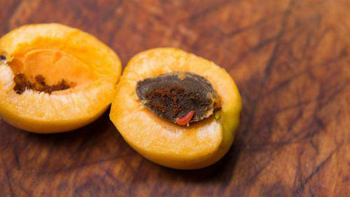 червивая абрикоса