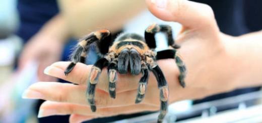 огромный паук во сне
