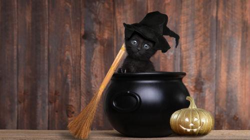 магический обряд с кошкой