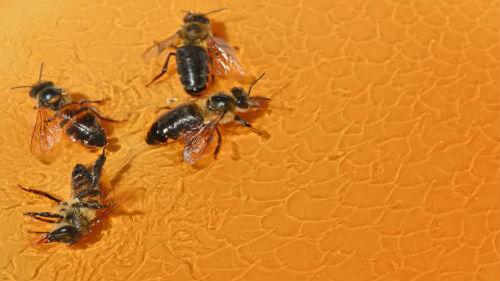 мед с пчелами