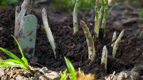 видеть грунт с травой