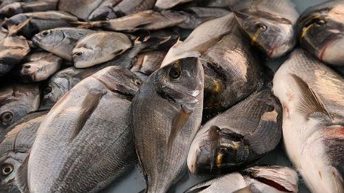 видеть много рыбы