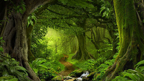 видеть лесную тропинку