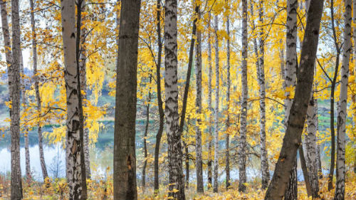 видеть осенний лес