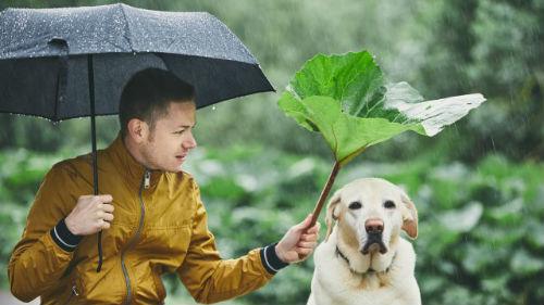 зонтик во сне