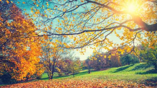осень во сне