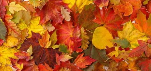осенние листья во сне