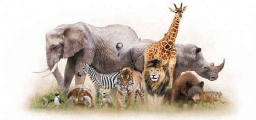 дикие животные во сне