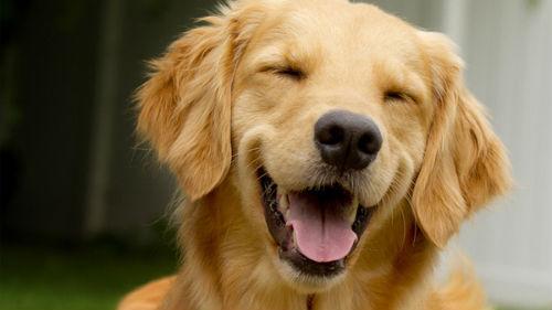видеть счастливую собаку